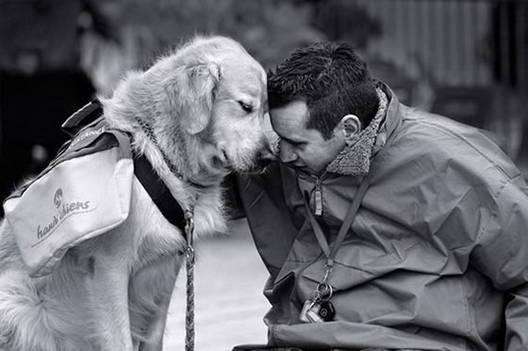Защо кучето е най-добрия приятел на човека и как да общуваме с него? ВИЖТЕ ТУК!