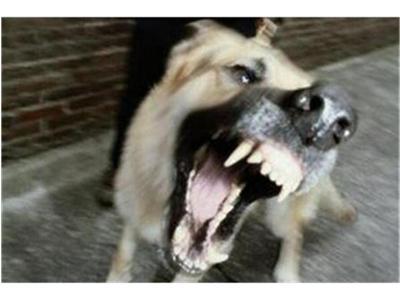 Истински ужас! Бездомно куче НАХАПА момченце на Коледа! Вижте подробности!
