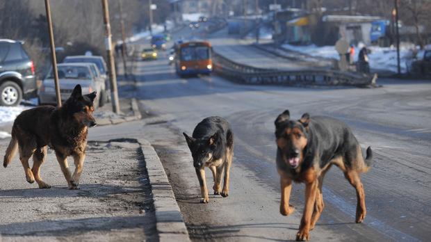 Отвратително! Хайки за ИЗБИВАНЕ на кучета вилнеят в социалната мрежа!!!