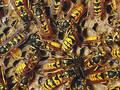 Учените разкриха нещо много любопитно, свързано с поведението на някои насекоми! Вижте!