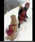 Това значи да си човек! Дете и куче спасиха живота на изпаднала в беда коза и бебчето ѝ!